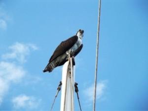 Osprey com