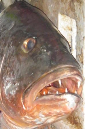 fishhead com