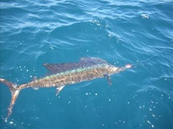 sailfish2Bin2Bwater-com