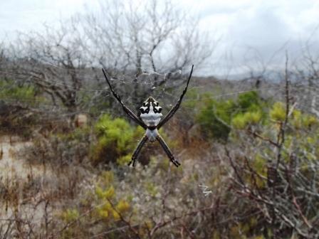 spider com