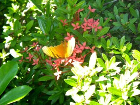 Barra butterfly com
