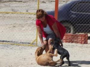 Lisa dog attack com